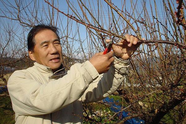 和歌山県佐々木農園