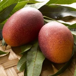 完熟マンゴー,太陽のタマゴ